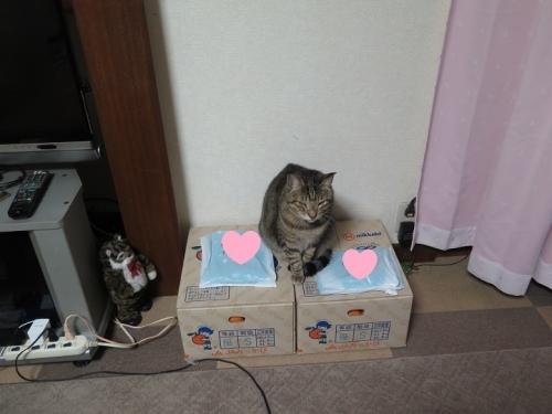 猫とみかん箱