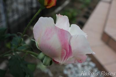 s-IMG_0600kako.jpg