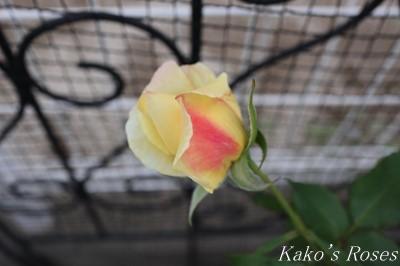 s-IMG_0631kako.jpg