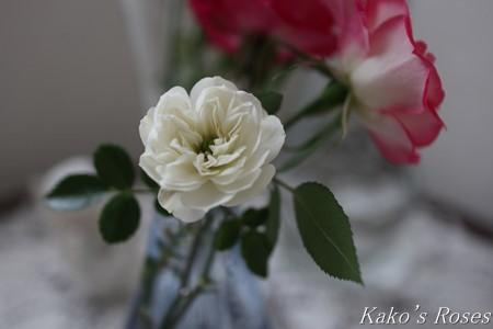 s-IMG_0639kako.jpg
