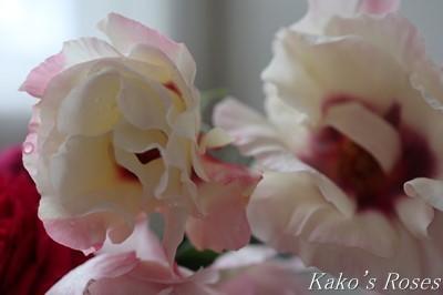 s-IMG_0641kako.jpg