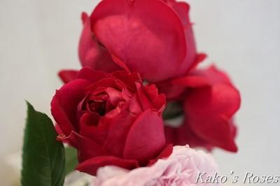 s-IMG_0646kako.jpg