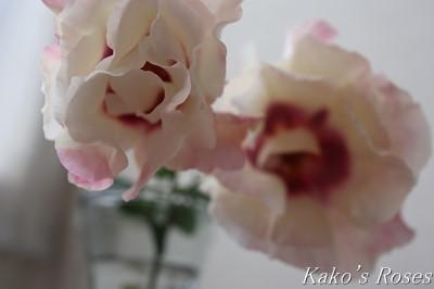 s-IMG_0648kako.jpg