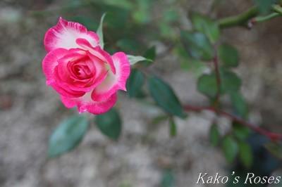 s-IMG_0650kako.jpg