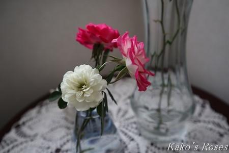 s-IMG_0684kako.jpg