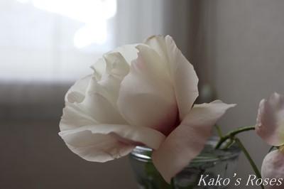 s-IMG_0687kako.jpg