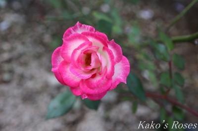 s-IMG_0688kako.jpg