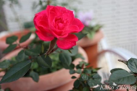 s-IMG_0689kako.jpg