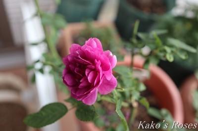 s-IMG_0693kako.jpg