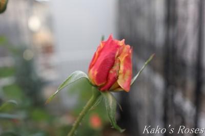 s-IMG_0695kako.jpg