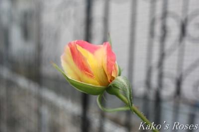 s-IMG_0696kako.jpg
