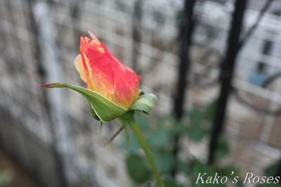 s-IMG_0698kako.jpg