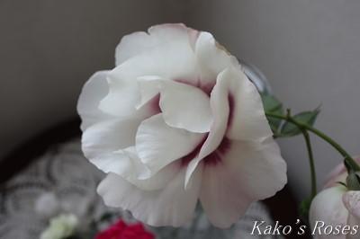 s-IMG_0703kako.jpg