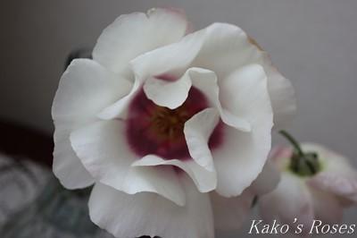 s-IMG_0704kako.jpg