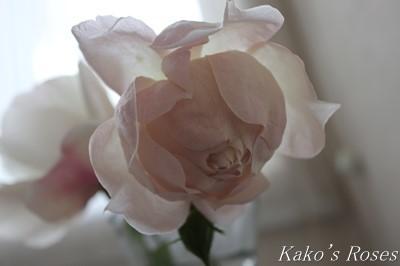 s-IMG_0705kako.jpg