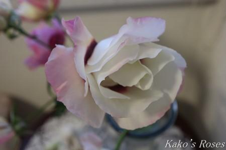 s-IMG_0719kako.jpg