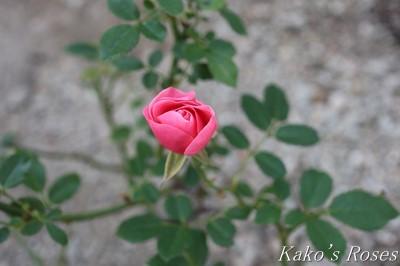 s-IMG_0737kako.jpg
