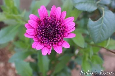 s-IMG_0743kako.jpg