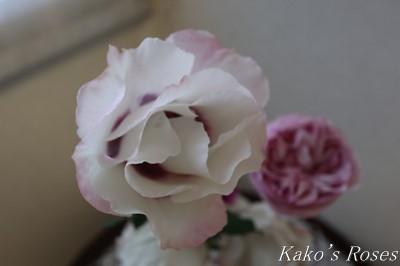 s-IMG_0764kako.jpg