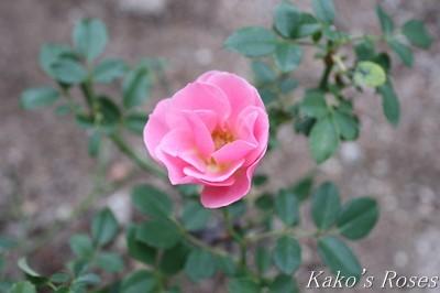 s-IMG_0768kako.jpg