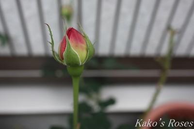 s-IMG_0769kako.jpg