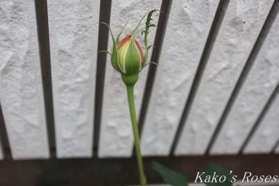 s-IMG_0770kako.jpg