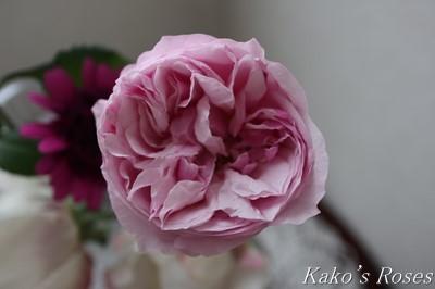 s-IMG_0783kako.jpg