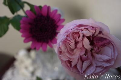 s-IMG_0797kako.jpg