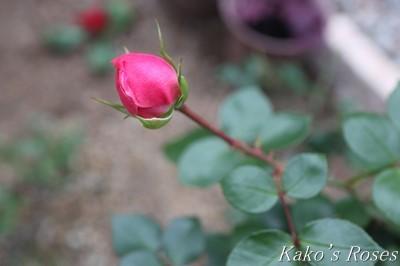 s-IMG_0880kako.jpg