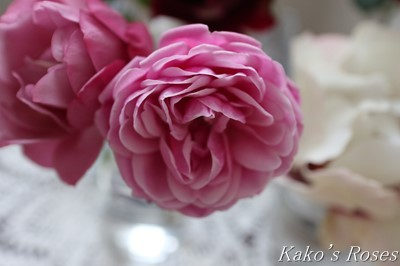 s-IMG_0895kako.jpg