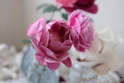 s-IMG_0896kako.jpg