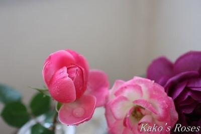 s-IMG_0930kako.jpg