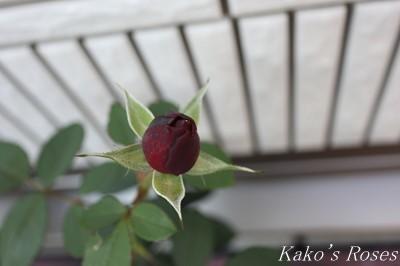 s-IMG_0939kako.jpg