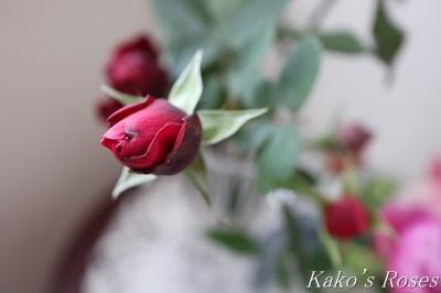 s-IMG_1011kako.jpg