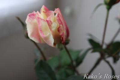 s-IMG_1012kako.jpg
