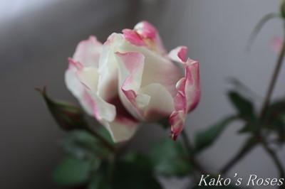 s-IMG_1029kako.jpg