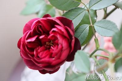 s-IMG_1043kako.jpg