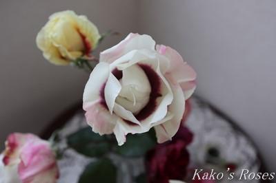 s-IMG_1046kako.jpg