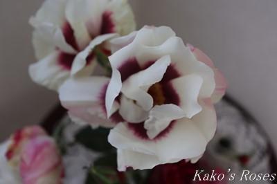 s-IMG_1072kako.jpg