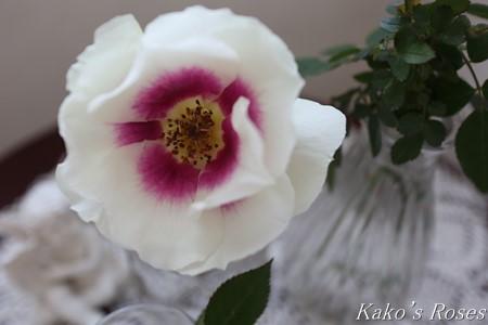 s-IMG_1169kako.jpg