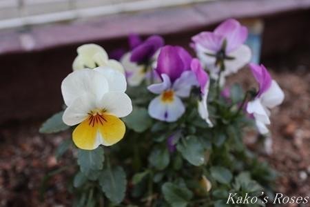 s-IMG_1249kako.jpg