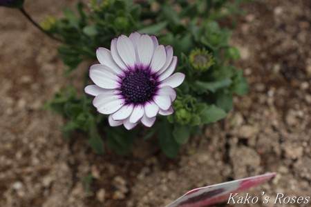 s-IMG_1358kako.jpg