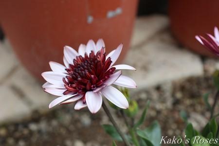s-IMG_1360kako.jpg