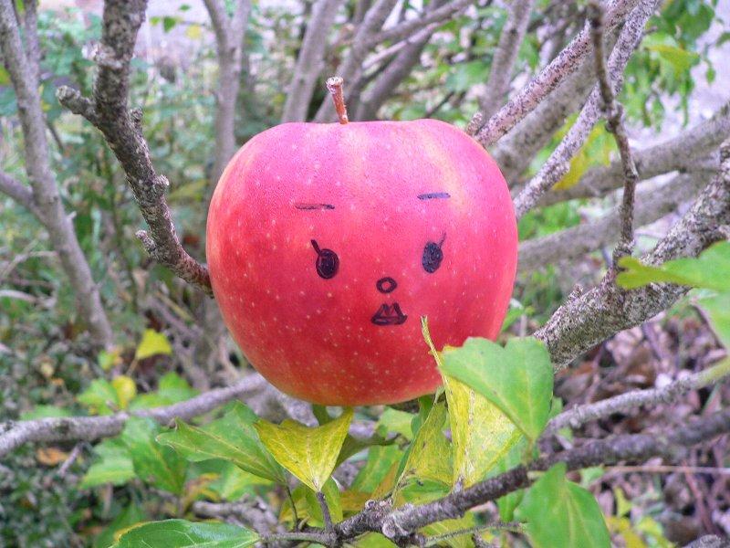 P1リンゴ249