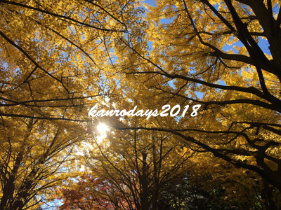 20181104_H大銀杏並木2