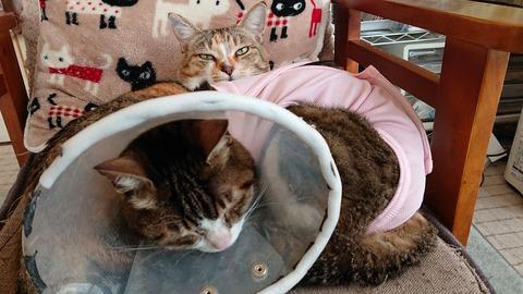 [二匹のかわいい猫]
