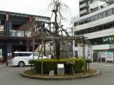 JR・京阪山科駅 スタンディングバスケット花壇&シダレザクラ