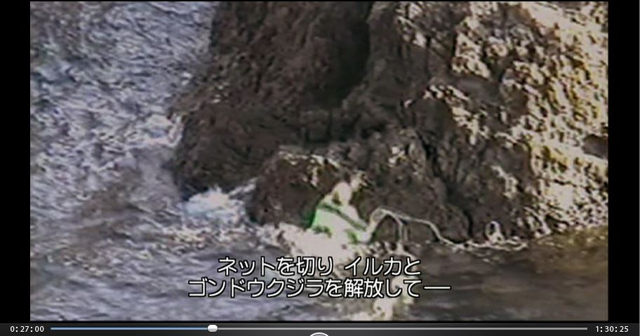 THECOVE岩から滑り落ちるシーシェパード