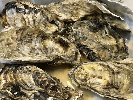 11172018 殻付き牡蛎 S1