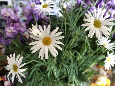 1032019 Flowers Marguerite S1